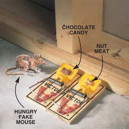 <b>Photo 1: Bait the traps</b></br> Set snap traps with the baited trigger end of the trap tight against the wall, because mice usually run along walls. Wherever possible, use two traps. Dispose of a dead mouse in a plastic bag in the garbage, then reuse the trap. The scent of the dead mouse will help attract any other mice in the house.