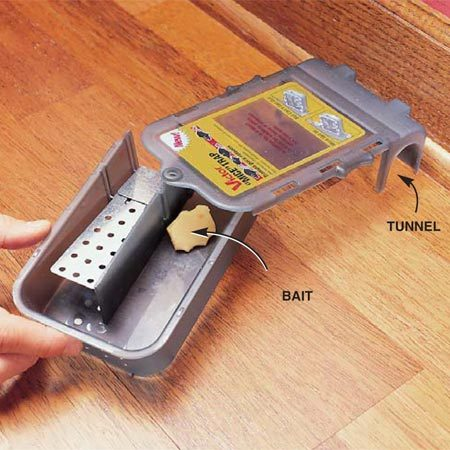 <b>Photo 3: Live traps </b></br> Live mousetraps allow mice to get in, but they can't get out. Place the trap so the tunnel is against the wall and parallel to it. A large baited compartment allows you to catch two mice at a time, so they won't get lonely. You can release the mice outside.
