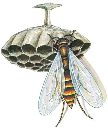 """<b>Stinging wasps</b></br> We do-it-yourselfers seem to have more wasp appeal than """"normal"""" folks, what with exterior painting, gutter repair and yard work. Try to get the nest in the spring before it gets big. Keep an eye on the wasps for a while to see where they go—either to a nest or to a hole in the ground. Use an aerosol wasp and hornet killer; it will shoot a stream of non-staining, quick-acting insecticide directly on the nest—up to 30 ft. away. <strong> Caution:</strong> The stream is powerful—but also toxic."""