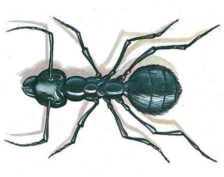 <b>Ants on the march</b><br/><p>Before you start whacking away at invading ants, figure out where they're coming from. Look for a trail, or a pattern in their appearance. The best way to control them in the house is to kill them in their nest. If you find the nest outdoors, apply an ant insecticide directly to it. If it's inside a wall, drill a 1/8-in. hole and squirt an insecticide or boric acid dust into the cavity. If you can't find the nest, use ant bait. The containers look like tiny flying saucers with holes in the sides. They do work, but you may not think so at first; it can take weeks to kill them all.</p>  <p>Check what your ants are eating. Some brands of bait work for sweet-feeding ants; others (like ant traps) attract protein feeders. If one type of bait doesn't work, try the other, or put out both at the same time.</p>