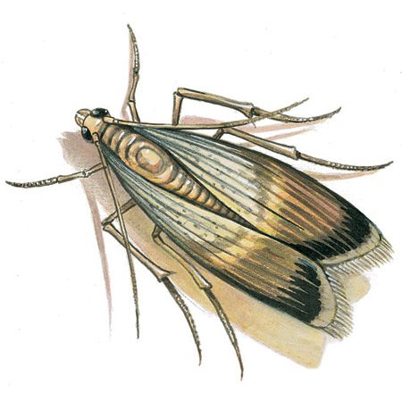 <b>Meal moths</b><br/><p>No, probably not. Meal moths, also known as pantry moths, get into dry food like flour, cornmeal, beans and dried fruit. Also food-based decorations and Christmas ornaments, birdseed and dog food. Either toss out the affected stuff or put it in the freezer for at least four days. Or heat it in a 130-degree oven for 30 minutes. Meal moths don't carry disease, so after picking the dead bodies and larvae out of the food, you can eat it. (Arrgh! Not me!)</p>  <p>Next time, store your food in glass or sturdy plastic containers with sealed lids. And would you believe this? High-IQ meal moth larvae can penetrate <em>unopened</em> plastic-wrapped food and then hatch.</p>