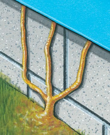 <b>Figure A: Mud tubes</b></br> Termites build mud tubes to get from the ground to the food source in your house.