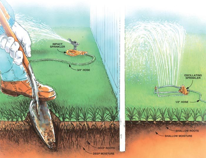 A properly watered lawn and an improperly watered lawn