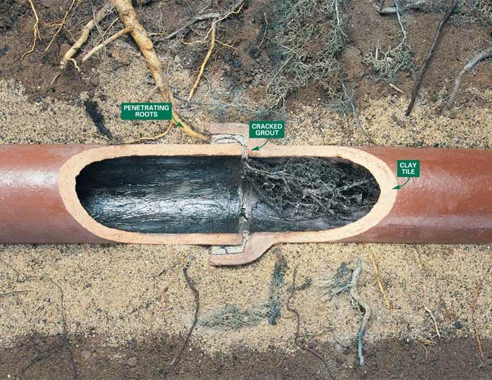 Roots enter clay sewer lines at joints