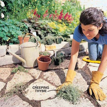 <b>Photo 11: Plant ground cover  </b></br> Plant creeping thyme or another durable spreading plant in the larger spaces. Dig down into the sand base to provide room for the roots. Loosen the roots and spread them out in the hole, then refill around the plant with potting mix and water the plant.