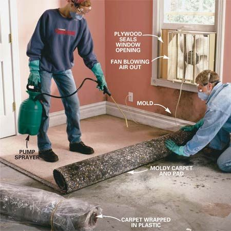 <b>Photo 1: Remove moldy carpet</b></br> Cut stained or musty carpet and pads into 6 x 8-ft. sections with a utility knife. Using a pump sprayer, mist the surfaces with water to control the spread of spores, and roll up the sections. Double-wrap them in 6-mil plastic and tape them with duct tape for disposal. Wear protective clothing and run an exhaust fan in the window.