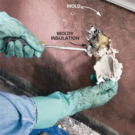 <b>Photo 3: Open up moldy walls</b></br> Pry off baseboards and trim from contaminated areas with a pry bar and block of wood. Probe heavily stained or moisture-swollen walls using a screwdriver to discover and open up moisture damage and hidden mold in the insulation and wall framing.