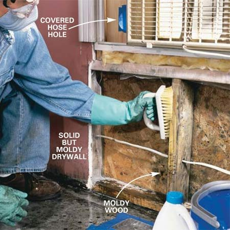 <b>Photo 6: Scrub moldy surfaces</b></br> <p>Scrub the surface mold stains from walls and wood trim with a mixture of 1 qt. water and 1/2 cup bleach to kill the mold. Use a soft brush and work until signs of the mold disappear.</p>  <p>Wipe off, but DO NOT RINSE these surfaces. Set trim in direct sunlight to dry. Scrub concrete with TSP or automatic dishwasher detergent.</p>