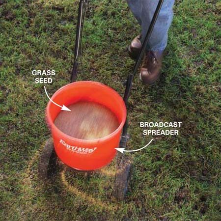 <b>Photo 2: Spread seed</b></br> Spread the grass seed at about half the rate recommended for new seeding of bare soil. Seed small areas by hand. Use a drop spreader or broadcast spreader to seed large areas.
