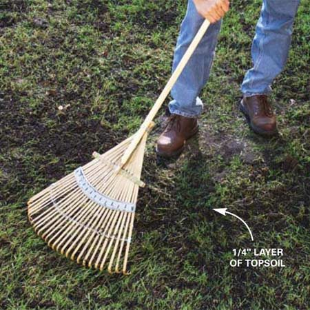 <b>Photo 4: Rake</b></br> Rake the surface with a fan or leaf rake to break up the soil plugs and spread the topsoil over the seeds. About 10 percent of the seeds will show. Water the new seeds with a sprinkler.