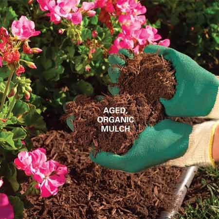 <b>Organic mulch</b></br> Use organic mulches when possible, because they decompose and improve the soil as they break down.