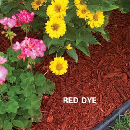 <b>Organic mulch colored red</b></br> Organic mulch colored with vegetable dyes adds contrast and interest to gardens. It'll need replenishing every two to three years.
