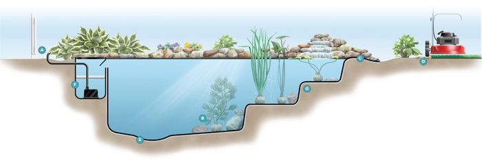 Pond cross-section