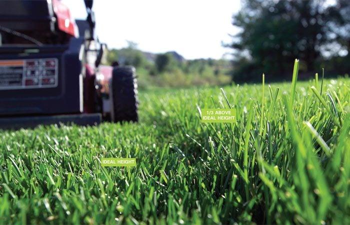 Set mower to ideal grass-cutting height
