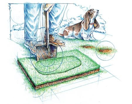 <b>Photo 1: Cut the sod patch</b></br> Lay the new sod over the dead spot and cut through both with a sharp spade.