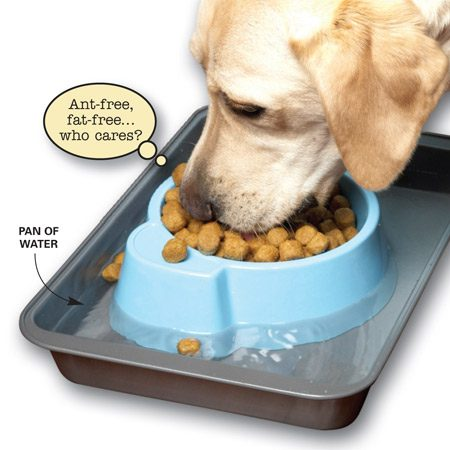 <b>Surround the food dish with water</b></br> In the summertime, a favorite destination for ants is often a pet's food bowl. Here's a simple  way to keep them out of your dog or cat's food—set the dish in a pan of water. Not only does it keep the ants out of the pet food, but your pet can take a gulp of water from the pan whenever he or she needs a drink.