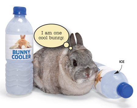 <b>Chilled water bottles keep bunnies cool</b></br> Hot summer days are tough on bunnies. Here's a great way to recycle plastic water bottles and keep your bunnies cool at the same time. Fill the bottles with water, freeze them solid and then set them out in the rabbit hutches. The bunnies love to laze against the bottles as the ice thaws. This works great with puppies, too.