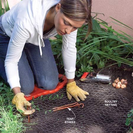 <b>Poultry netting protects bulbs</b></br> Keep hungry critters from snacking on your freshly planted flower bulbs by staking poultry netting over the bed. You can either remove the cloth in the early spring or let plants grow through the holes and leave it throughout the growing season.
