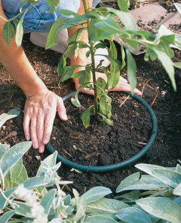 "<b>The plastic collar keeps roots in one spot</b></br> Push this ""collar"" into the soil (or drive it down with a mallet) to encircle the plant and its invasive root system. If the soil has become compacted, cut around the plant with a spade first. Note: This technique won't contain plants that spread above ground like strawberries and mint."