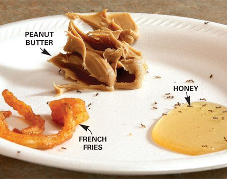 <b>Test different foods</b><br/>Test the ants to find out what type of foods they like. Set out sugar or honey, fried food and peanut butter, then see which food attracts ants. Use whichever food they prefer for bait.