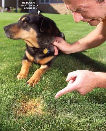<b>An ounce of prevention</b></br> <p>1. Soak your pet's favorite areas in your lawn to get the salts out of the root zone before they kill the grass.</p> <p>2. Fertilize your lawn in the spring to boost the overall color and mask the darker green dog spots.</p> <p>3. Train your pet to urinate in a designated area. Replace or repair the grass in this area annually or cover it with mulch.</p> <p>4. Keep your pet well hydrated to make its urine less concentrated.</p> <p>5. Become a cat person.</p>