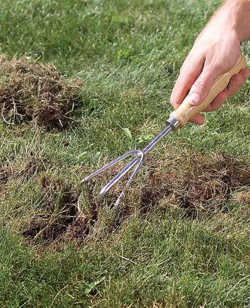 <b>Photo 2: Scrape</b></br> Scrape up the dead grass with a hand rake and remove it. Rough up the area to loosen the soil 1/2 in. deep. Seeds germinate better in soft soil.