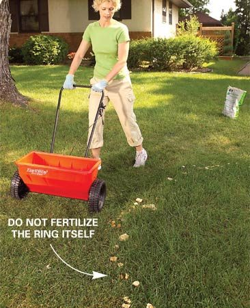 <b>Photo 1: Fertilize around it</b></br> Spread 1/2 lb. of nitrogen fertilizer per 1,000 sq. ft. to green up your lawn, but skip the fairy ring zone. This masks the lush green of the fairy ring by blending it into the rest of your yard.