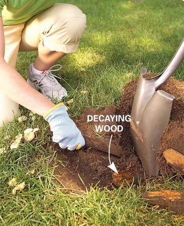 "<b>Photo 3: Dig up the problem</b></br> Go ""treasure"" hunting if you see no improvement in three weeks. Dig out rotting stumps, roots, construction debris or other organic materials under your lawn."