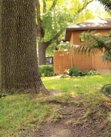 <b>An ounce of prevention</b></br> Avoid the frustration of sun-starved grass by starting a shade garden or ground cover in any area that doesn't receive six to eight hours of good light.