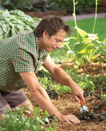 <b>Photo 1: Replant with shade lovers</b></br> Using a garden hoe, work up the shady area to remove any struggling grass. Plant ground cover or a shade garden.