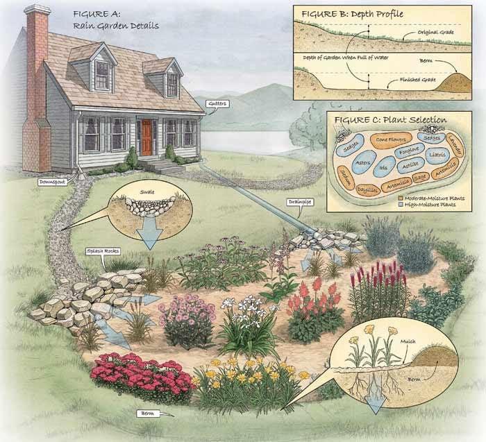 Figure A: Rain garden details