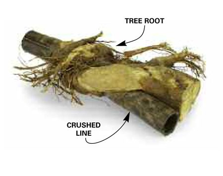 <b>Photo 1: Crushed pipe</b></br> Tree roots can grow around a pipe and squeeze it closed after several years.