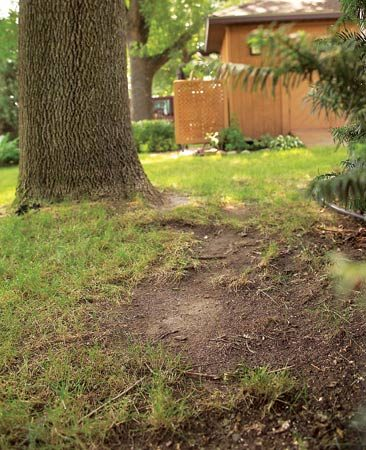 <b>Deep shade</b></br> It's almost impossible to grow grass in deep shade. Plant ground covers instead.