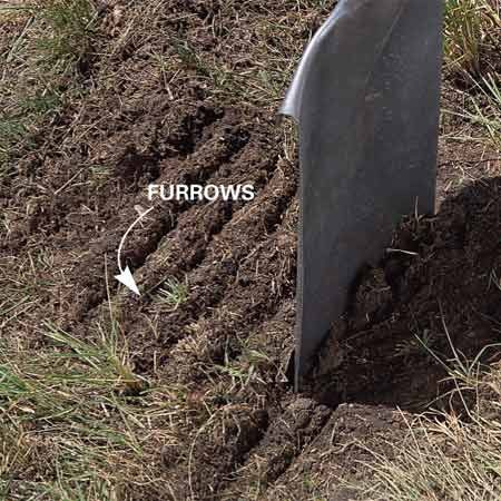 <b>Photo 2: Furrow the dirt</b></br> Create 1/4-in.-deep furrows every 2 in. using a flat shovel. This will give your seeds a better chance to settle into the moist soil.