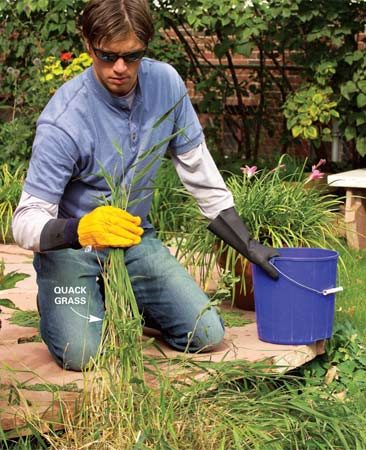 <b>Photo 1: Wipe technique</b><br/>Apply herbicide to perennial grasses without killing the surrounding grass. Wear a cloth glove over a rubber glove. Dip your gloved hand in the herbicide and wipe it on.