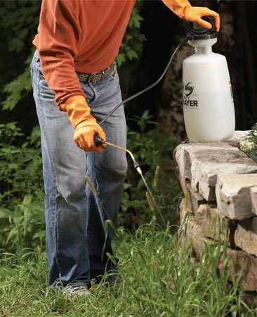 <b>Photo 2: Spray technique</b><br/>Spray herbicide to kill patches of perennial grassy weeds. Mow the weeds after they&#39;re dead, then plant grass seed in the area.