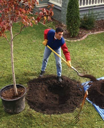 <b>Locate the tree where roots and tree limbs won't damage the house</b><br/>Fruiting trees create shade, fall color and spring blossoms.