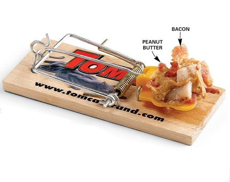 <b>The perfect mouse bait</b></br> Peanut butter and bacon are the best mouse baits.