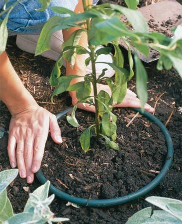 <b>Photo 2: Plant the pot</b></br> Set the container in the ground. Replant spreading plants inside it to hold in the roots.