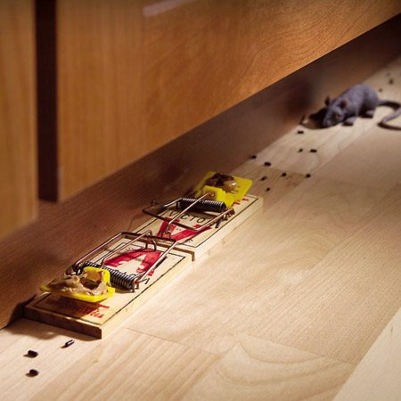 <b>Set mousetraps correctly</b></br> Snap-type mousetraps, when well placed, can be an effective way to rid your house of mice. Common mistakes are poor placement of traps and using too few of them. Place snap traps along walls in areas where you've seen the telltale brown pellets. The best technique is to set two traps, parallel to the wall, with the triggers facing out. While mice can jump over one trap, they can't jump two. Favorite baits of professional exterminators are chocolate syrup and peanut butter.