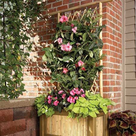 Bamboo planter and trellis