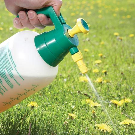 <b>Photo 9: Spot-spray individual weeds</b></br> Don't treat the entire lawn if you have just a few weeds. A pump sprayer is more economical than buying spray bottles. Be sure there's no rain in the forecast for 24 hours.