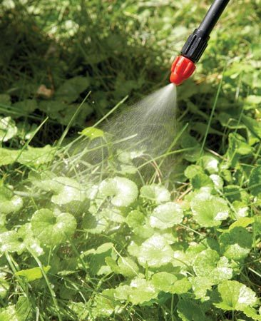 <b>Photo 2: ...Or kill it with herbicide</b></br> Cover nearby plants with a tarp. Choose a calm day and hold the spray head close to the grass to prevent overspray.