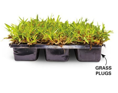 <b>Shade-tolerant grass plugs</b></br> St. Augustine grass plugs are your best bet in warm-season areas.