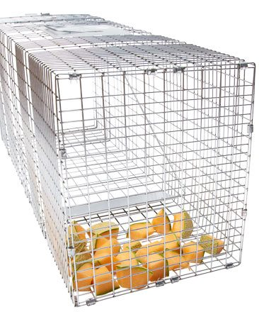 <b>Live trap</b></br> To live-trap a ground hog (aka a woodchuck), bait the trap with cantaloupe—the more rotten, the better.