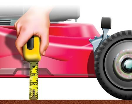 <b>Measure your lawnmower cutting height</b></br> Set the lawnmower cutting height to match the ideal cut length of your grass type.