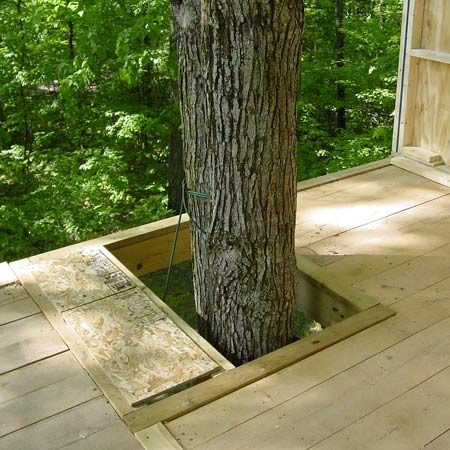 <b>Leave gaps around the tree</b><br/>To accommodate tree movement and growth, allow gaps around any branches or trunks that penetrate the tree house. <br/>Photo courtesy of Craig MacLean