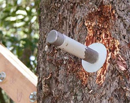 <b>Heavy duty custom bolt</b><br/><p>Large, strong custom bolts  can support   tree house beams with only  one puncture   point in the tree. These  specialty tree   house fasteners (known as  TABs or GLs)   are worth considering if you  want your tree   house to last more than a  few years, you   want to keep tree damage to  a minimum   and the tree house you&rsquo;re  building is large. </p><br/>Photo courtesy of Michael Garner