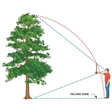 "<b>Estimate the felling zone</b></br> Trees are taller than you think and reach farther on the ground than you'd expect (maybe all the way to your shed). You can estimate where a tree will fall by using the ""ax handle trick."" Hold an ax handle at arm's length, close one eye, and back away from or move toward the tree until the top of the ax is even with the treetop and the bottom even with the base. Your feet should be about where the treetop will rest after falling. It's just an estimate, though, so allow extra room if there's something it might fall on!"