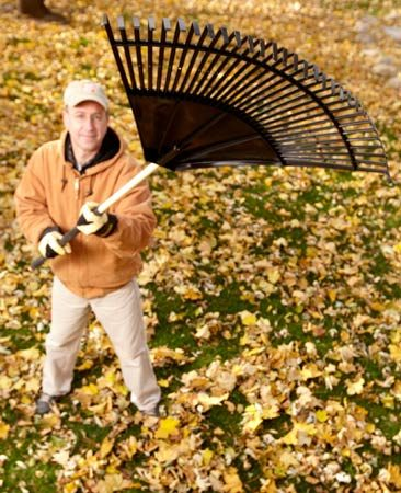 """<b>The right tool</b></br> <p>Lots of Field Editors told us about their favorite rakes. The most popular rakes are beloved just for their size—a big rake makes the job smaller. Most home centers carry rakes up to 30 in. wide.</p>  <p>Other Field Editors swear by """"no-clog"""" rakes—the tines don't skewer leaves, so you don't have to stop and unclog the rake. Several manufacturers make them, also in widths up to 30 in.</p>"""